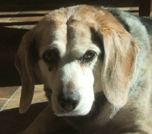 Rest in peace, sweet girlie. We love you.